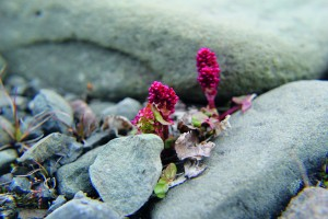 IMG_2568_blomst